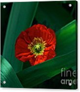 Green Loves Red Loves Green Acrylic Print