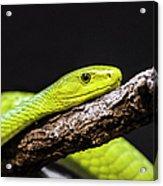 Green Mamba - Mamba Verte - Grüne Mamba Acrylic Print