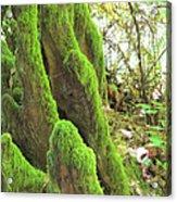 Green Moss Acrylic Print