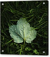 Green On Green Acrylic Print