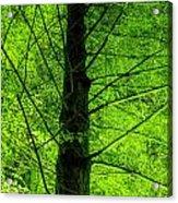 Green On Green Acrylic Print