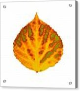 Green Orange Red And Yellow Aspen Leaf 1 Acrylic Print