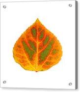 Green Orange Red And Yellow Aspen Leaf 5 Acrylic Print