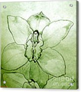 Green Orchid Acrylic Print by Patricia Howitt