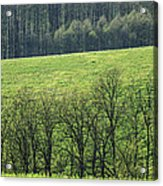 Green Peace Acrylic Print by Davorin Mance