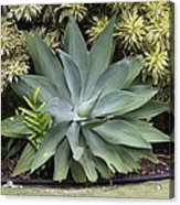 Green Plant Acrylic Print