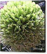 Green Pom Pom Acrylic Print