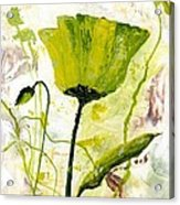 Green Poppy 003 Acrylic Print