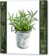 Green Rosemary Herb In Small Pot Acrylic Print