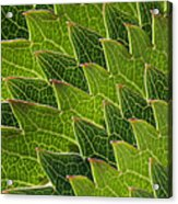 Green Scales Of A Dragon Acrylic Print