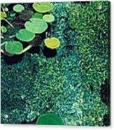 Green Shimmering Pond Acrylic Print