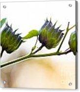 Green Spiky Wild Flowers Acrylic Print
