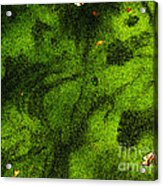 Green Surface Acrylic Print