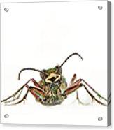 Green Tiger Beetle Acrylic Print