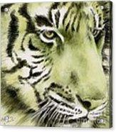 Green Tiger Acrylic Print by Summer Celeste