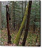 Green Timber Acrylic Print