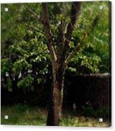 Green Tree In Park Acrylic Print