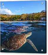 Green Turtle - Sea Turtle Acrylic Print