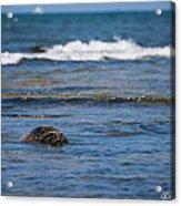 Green Turtle Surf Acrylic Print
