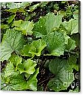 Green Vine Acrylic Print