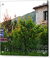 Green Vineyards Acrylic Print by Sarah Christian