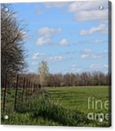 Green Wheat Field With Blue Sky Acrylic Print