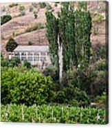 Green Wine Yard Acrylic Print