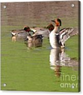 Green-winged Teals Acrylic Print