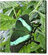 Green Wings 2 Acrylic Print