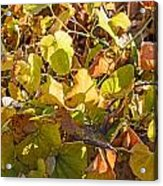 Green Yellow And Dry Leaves Acrylic Print