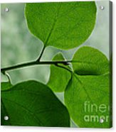 Green Zen Acrylic Print
