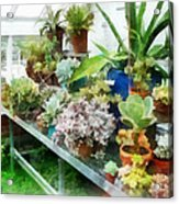 Greenhouse With Cactus Acrylic Print