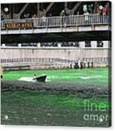 Greening The Chicago River Acrylic Print