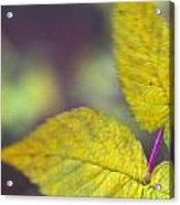 Greenleaf Acrylic Print