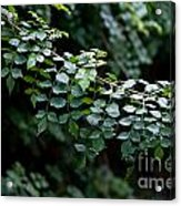 Greens Acrylic Print by Dan Holm