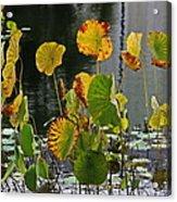 Greens On A Pond Acrylic Print