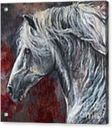 Grey Andalusian Horse Oil Painting 2013 11 26 Acrylic Print