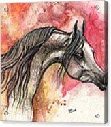 Grey Arabian Horse On Red Background 2013 11 17  Acrylic Print