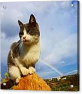 Grey Cat And Rainbow Acrylic Print