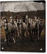 Grey Horses Acrylic Print