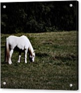 Grey In The Pasture Acrylic Print