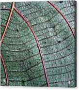 Grey Leaf With Purple Veins 2 Acrylic Print