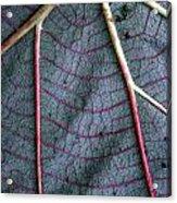 Grey Leaf With Purple Veins Acrylic Print