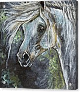 Grey Pony With Long Mane Oil Painting Acrylic Print