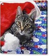 Grey Tabby Cat With Santa Claus Hat Acrylic Print