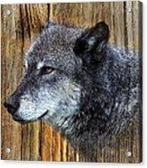 Grey Wolf On Wood Acrylic Print
