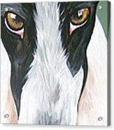 Greyhound Eyes Acrylic Print