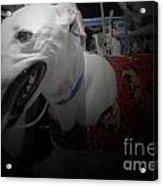 Greyhound Rescue 8 Acrylic Print by Jackie Bodnar