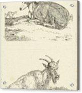 Greyhounds And Goat, Jan Dasveldt Acrylic Print
