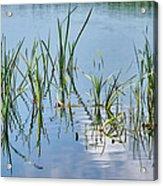 Greylake Reflections Acrylic Print